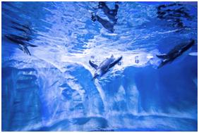 """大连圣亚""""第五代海洋公园""""淮安龙宫大白鲸极地海洋馆"""