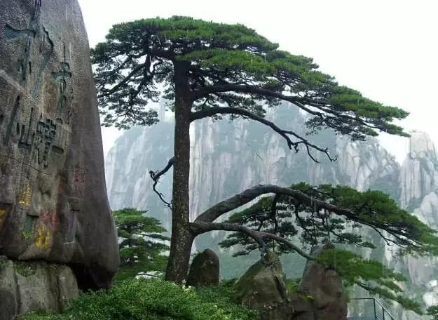 中国最古老的10颗大树 你看过多少棵?