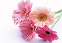 双语阅读:10种鲜花的英文名及含义