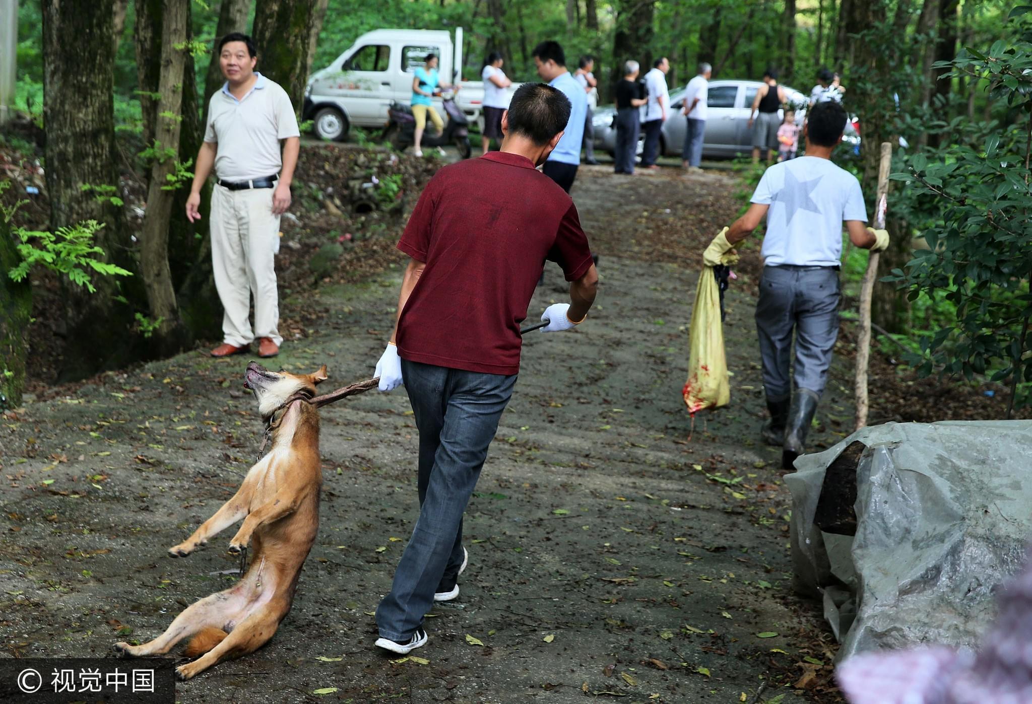 狂犬病致死率100%,但在中国依然失控肆虐