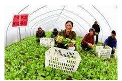 产业扶贫促发展 江陵县星星村扶贫工作成效显著