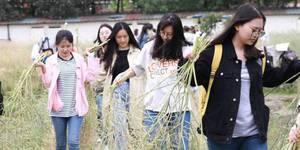 这才是真正的劳动节:高校学生集体榨菜籽油
