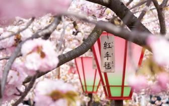 2018最佳日本赏樱路线  只需清明请假两天