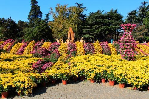 这个秋天去中山公园看菊展