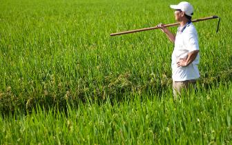 """蚌埠市提前实现农业减""""肥""""目标"""