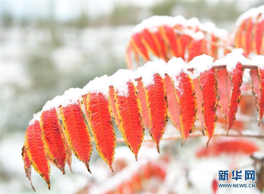 北方大降温,内蒙古、甘肃部分地区出现降雪