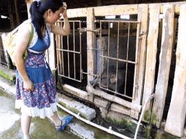 女大学生返乡 白手起家创办规模化养猪场