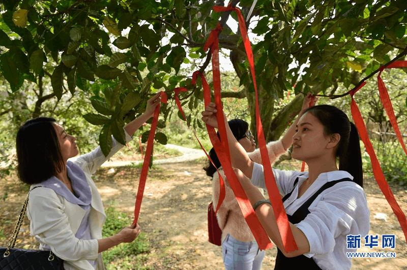 云霄县下河乡杨桃岛生态观光园全面建成开放