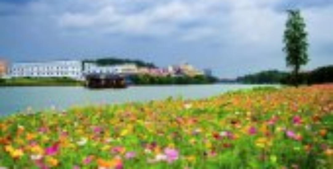 比丽江还要美的格桑花海 美景美食就在深圳周边!
