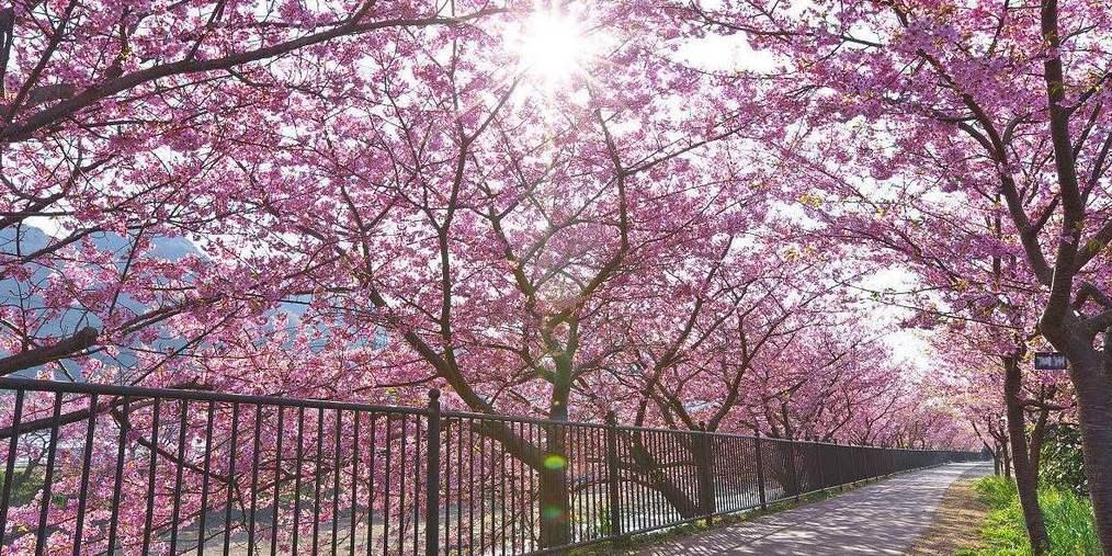 我能想到最浪漫的事:和你去青秀山看樱花