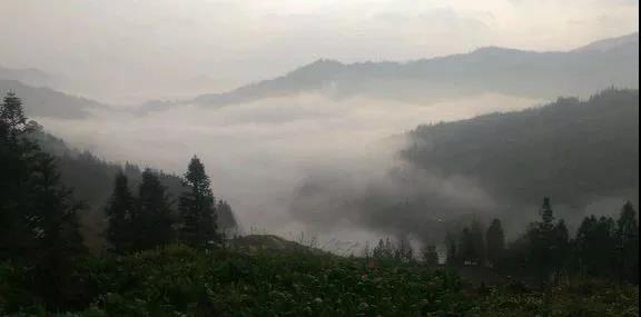 隐藏鬼怪的迷雾森林 作者供图
