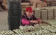 鸡蛋价格低迷 小规模养殖户遭遇灭顶之灾
