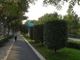 泰州人民公园入选中国10个最适合跑步的地方