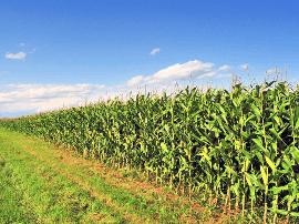运城市推进现代农业强市建设取得新突破