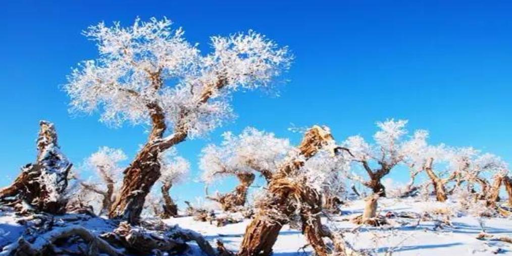 沙漠雪景称奇 新疆下了一场雪 美哭了全世界!