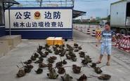 中越边境查获大量保护动物