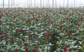 福建花卉苗木产值突破640亿 花卉产业大有可为