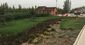 沧州大运河沿线绿化工程基本完工