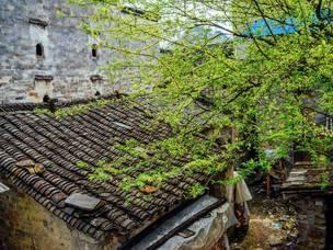 浙江10大最美乡村,各个都是世外桃源