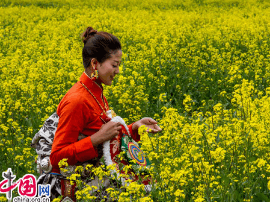 四川道孚油菜花节开幕 万人相聚看万亩花海