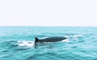 提倡大家爱护鲸鱼!共同保护海洋环境。