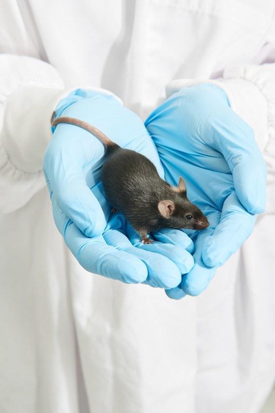 基因编辑技术将改变人类消灭入侵物种的方式