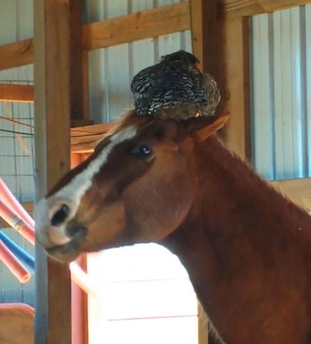 """妹子早上查看马厩,竟看到了传说中的""""马杀鸡""""!"""