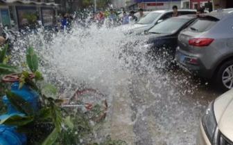 昨一女司机在珠海明珠路倒车倒出人工喷泉!