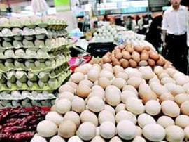 """全国鸡蛋价格连续8个月下跌 蛋价恐难""""走牛"""""""