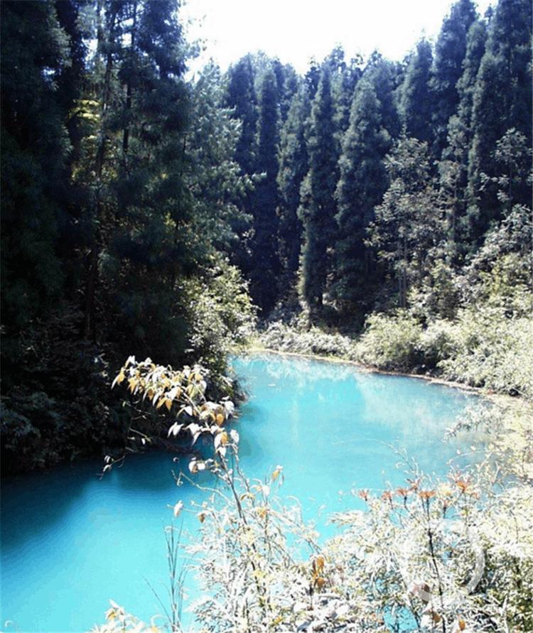 去江津大圆洞国家森林公园 这里有重庆最美森林氧吧