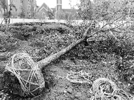 南昌县幸福时光小区未办手续 私自挖树毁绿建