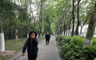 春季杨絮频扰民 省林业厅:已压缩种植面积