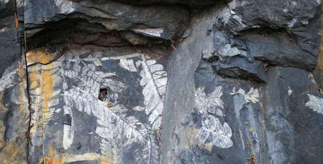 深圳古化石遗址无人看守 现场现斧凿痕