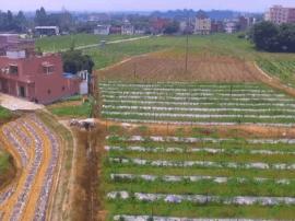 太平南浦将和广州中医药大学合作,打造中药花卉基地