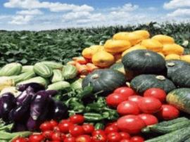 河北省出台意见:2020年农产品网售将超300亿