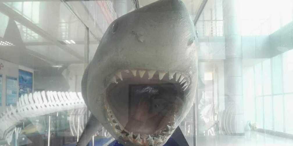中国的海洋大学中最大的海洋博物馆!居然藏在湛江...