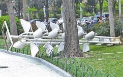 郑州文博广场欲打造银杏主题广场