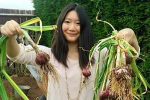 英国大蒜2.6元1颗 华人自己种