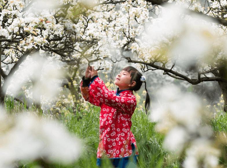 万盛五和梨花文化旅游节18日启幕