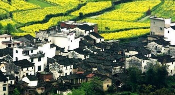 中国十大最美油菜花