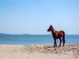骑马看海把日子过成诗 崂山有一个希腊小城