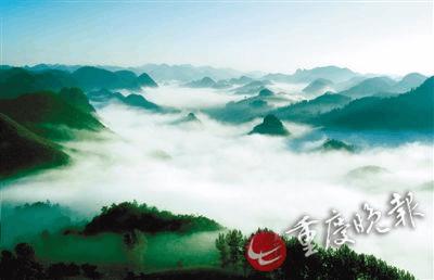 黔江国家森林公园 高山杜鹃绽放