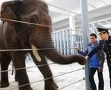 亚洲最大陆生动物来啦 天暖后就能和市民见面