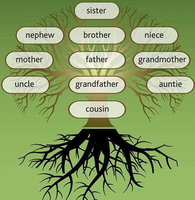 """双语阅读:这些""""远房亲戚""""用英语怎么说"""