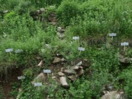 邯郸:药材成为农民收入倍增的主要途径