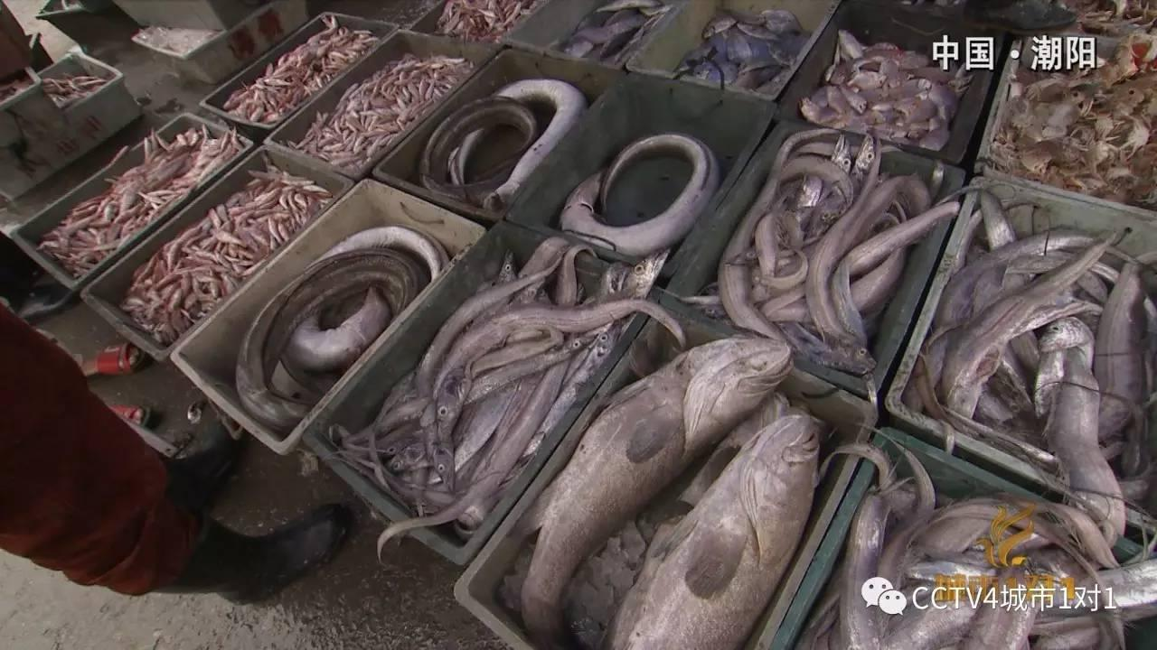 潮汕怪鱼美食亮相央视:马鞭鱼和鲎粿