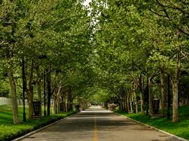 青岛市北区5个山头公园将绿化 计划整治80条道路