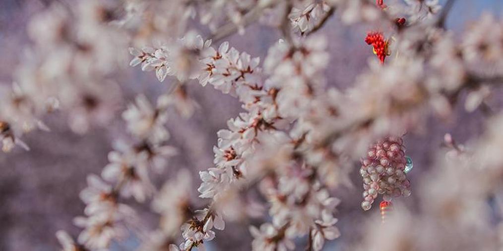 晋城:正是百花盛开踏青的季节