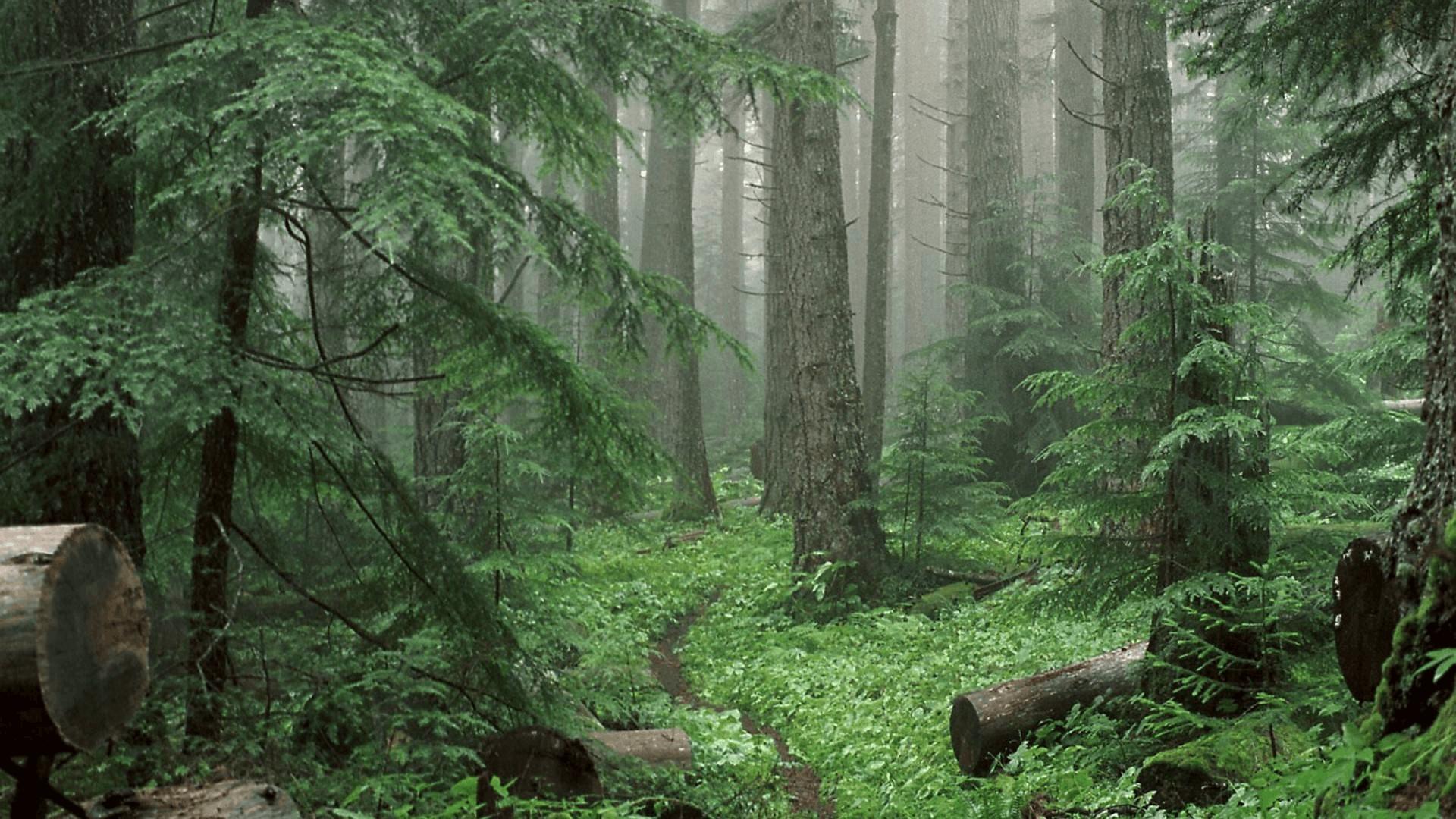中国原始森林仅占全国森林面积7.59%!