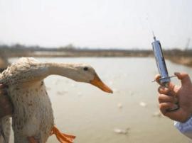 华安县全面启动春季重大动物疫病防控工作